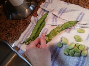 First step: remove the fava beans from the outer shell.